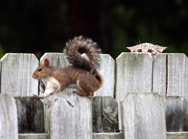 21 January is: Squirrel Appreciation Day - https://t.co/mCeyhgA68G   #SquirrelAppreciationDay #SquirrelArmy https://t.co/KdaIs5gM0M