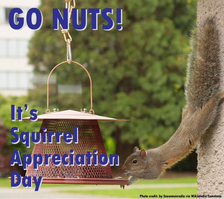 #news Squirrel! Today is Squirrel Appreciation Day! (Yes, we know it's not news... we just think it's funny!) https://t.co/VCLD0bAVhX