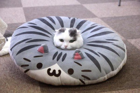 To understand pillow, you must be one with pillow. via /r/cats https://t.co/ppUy4VSdn8 https://t.co/LYJBiWziZN https://t.co/Gfi3cjlYFa