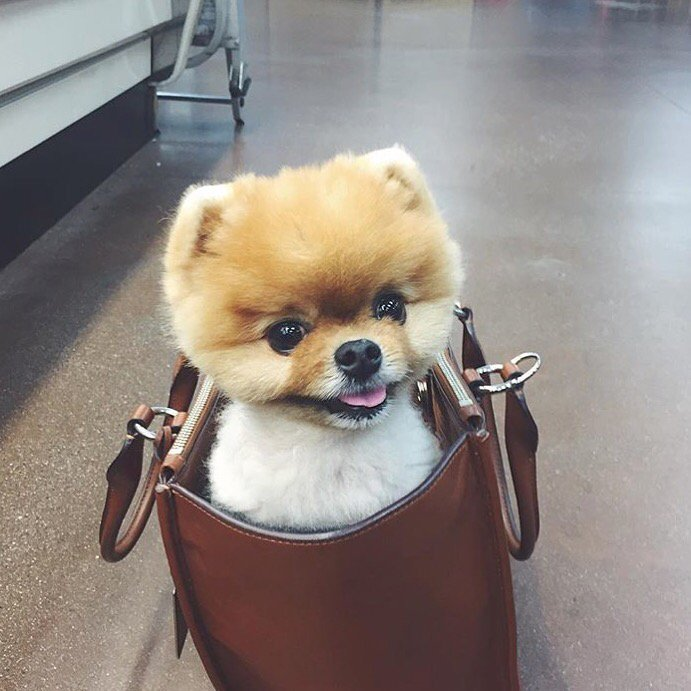 When you casually run into @jiffpom at your local Trader Joe's https://t.co/bxq9KmvvxZ
