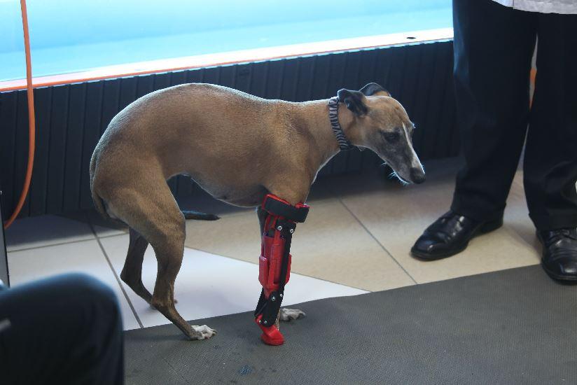 Romina podrá caminar sin problemas gracias a una prótesis desarrollada por @UVMMEXICO https://t.co/9tuSiuWrZB https://t.co/5AqwIdQ0rG