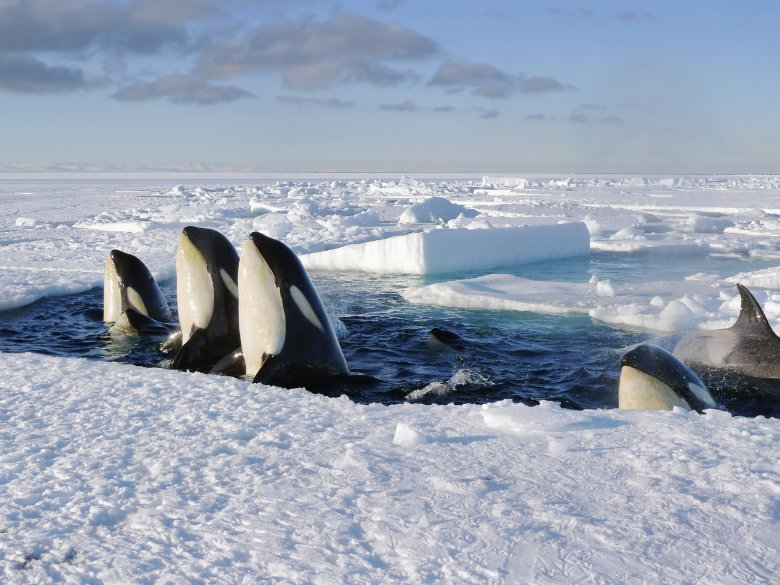 Frozen Planet focuses on life and the environment in both the Arctic and Antarctic. https://t.co/RALjYzHqQ2