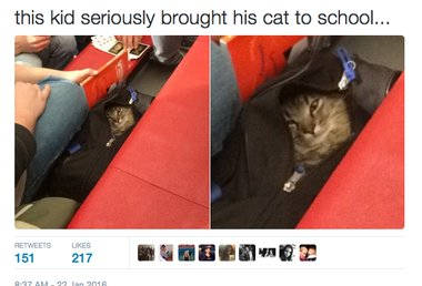 Cat in a bag at school: Student prank foiled at Easton High https://t.co/zNPZ32EfYJ https://t.co/E5jDfxLuAx