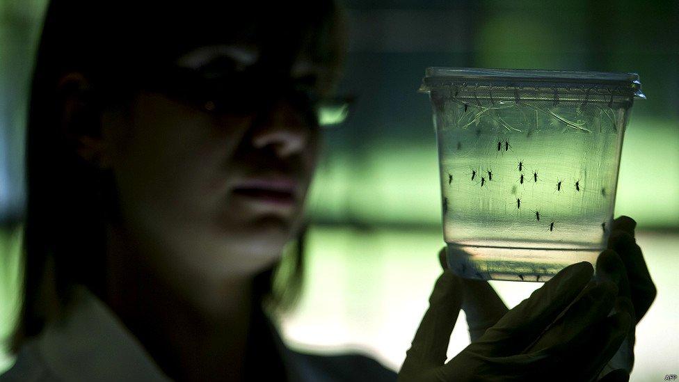 Virus Zika, tre casi confermati in Italia importati dalla Polinesia