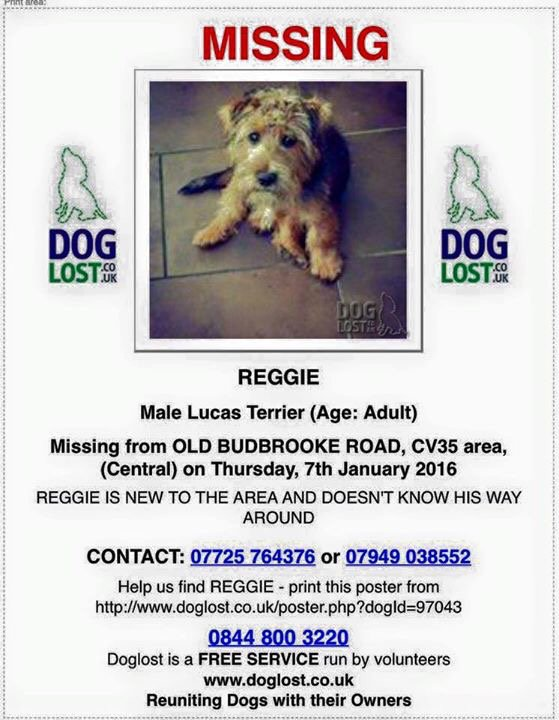 Reggie has been spotted in Priory Park - PLEASE RETWEET (missing for two weeks) #FindReggie #Warwick https://t.co/zESdnMYIse