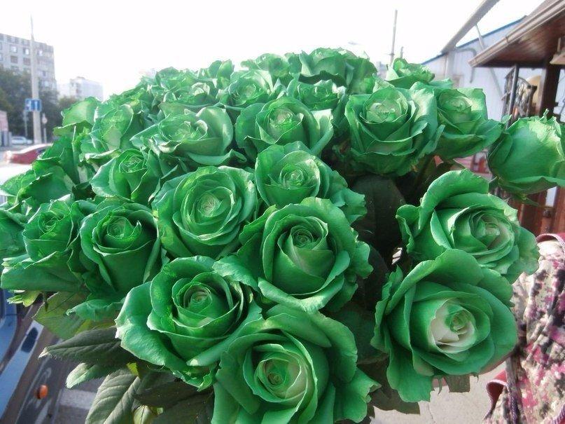 Цветов одесса, букет роз зеленых фото