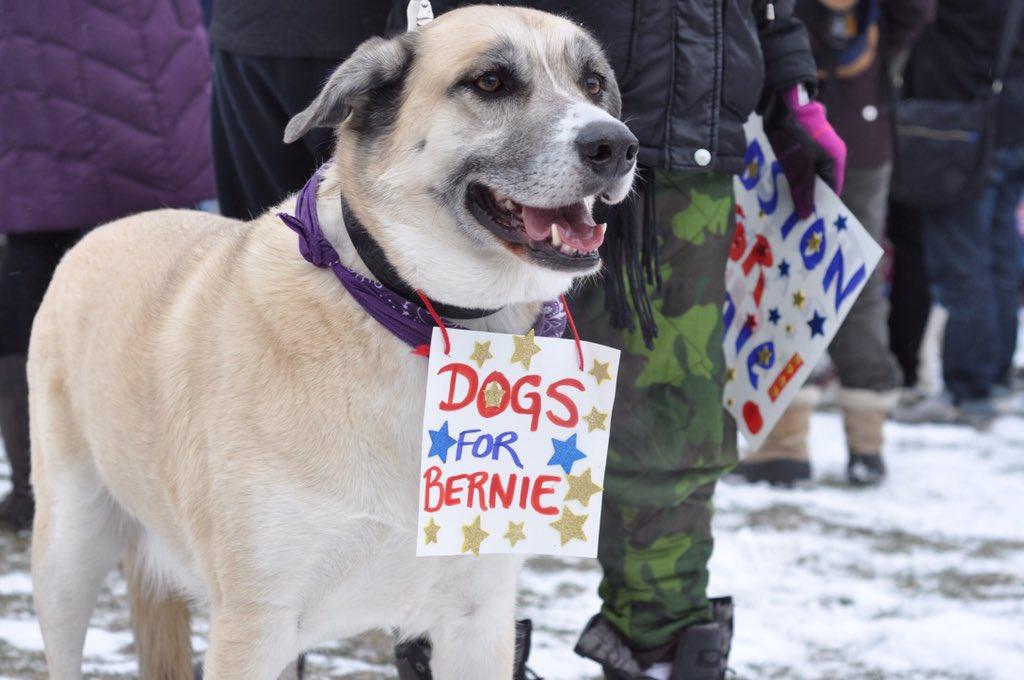 Dogs for Bernie! #MarchForBernie #FeelTheBern https://t.co/s6VVCqS8kk