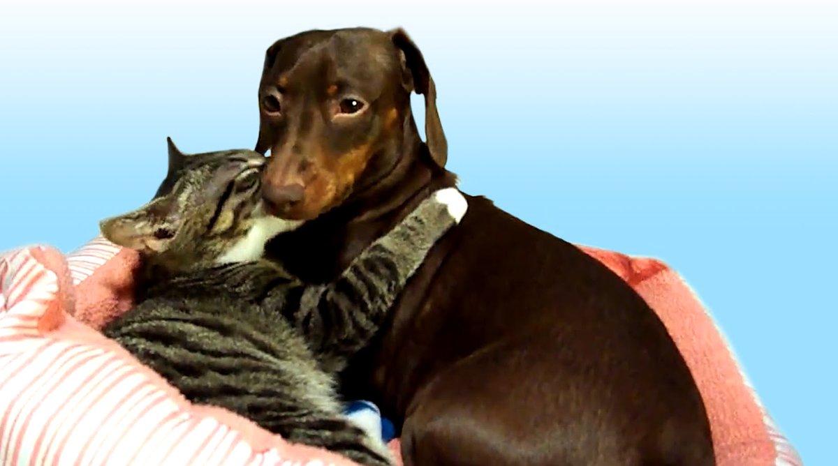 картинки с таксами и кошками ближе, как
