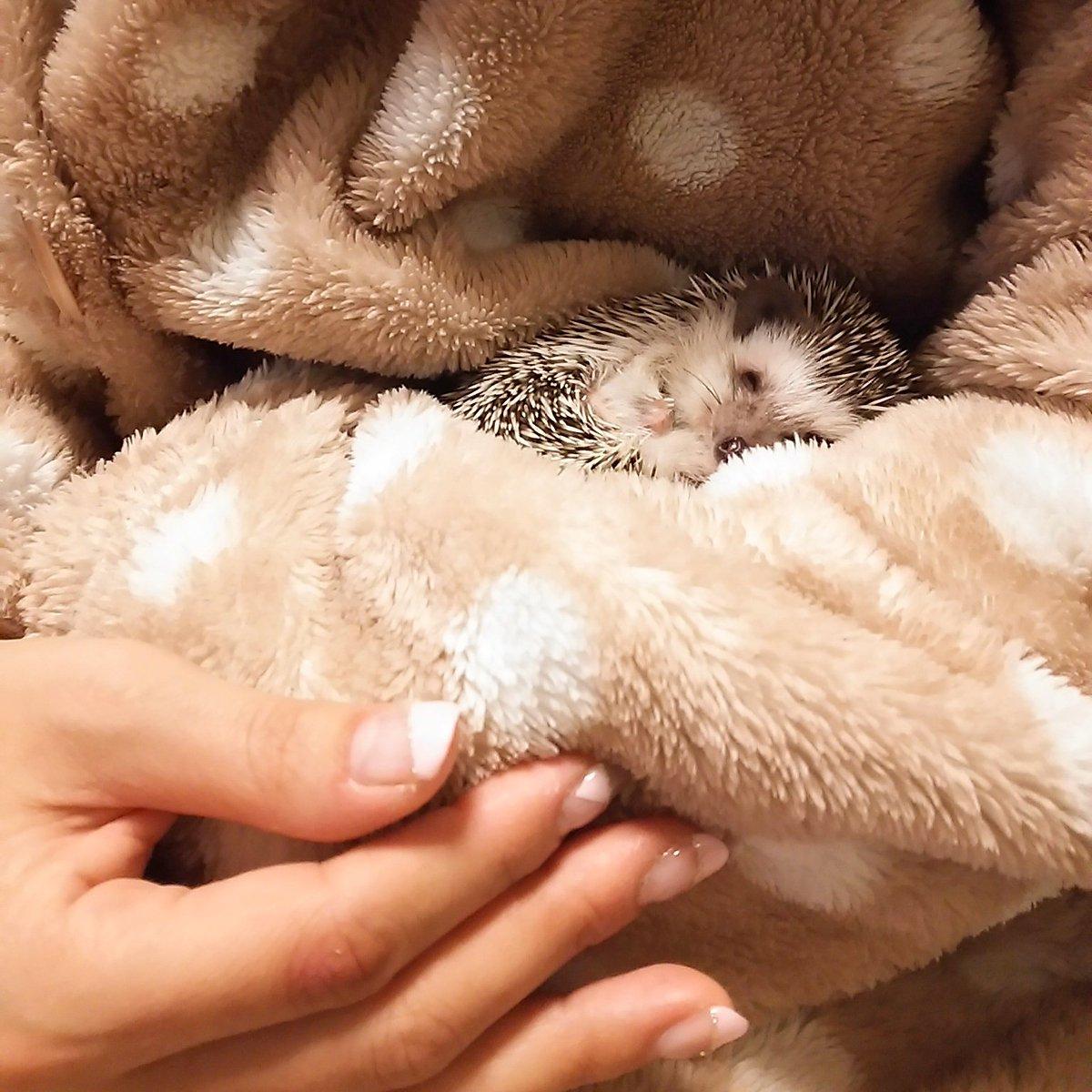 お気に入りの温かい場所。おやすみなさい…。 instagram.com/p/BA7U1zQlRSI/ pic.twitter.com/2TyKppXKua