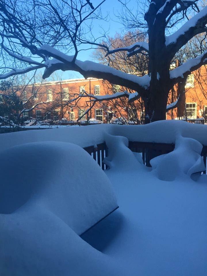 "23"" in Arlington, VA. Photo taken by an old friend there. #vawx #snow #Jonas https://t.co/DUWrnT8UJk"