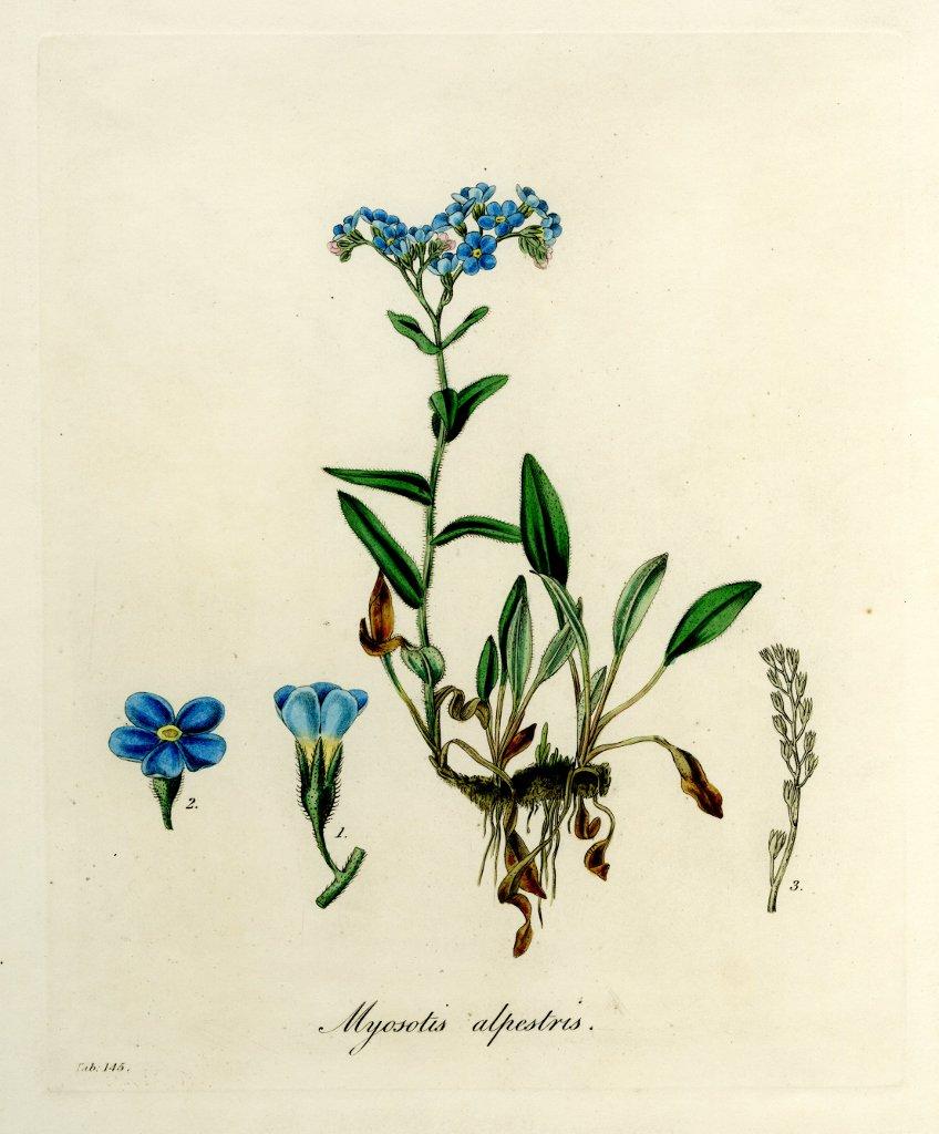 Thumbnail for Botanic Monday Strikes Again!
