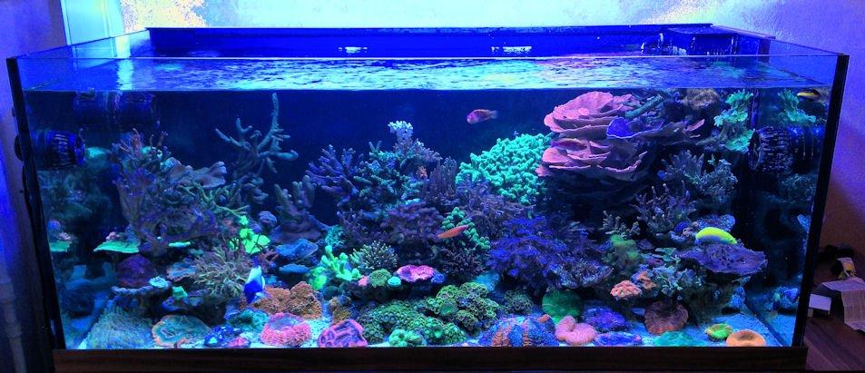 Hamilton Technology On Twitter This 90 Gallon Reef