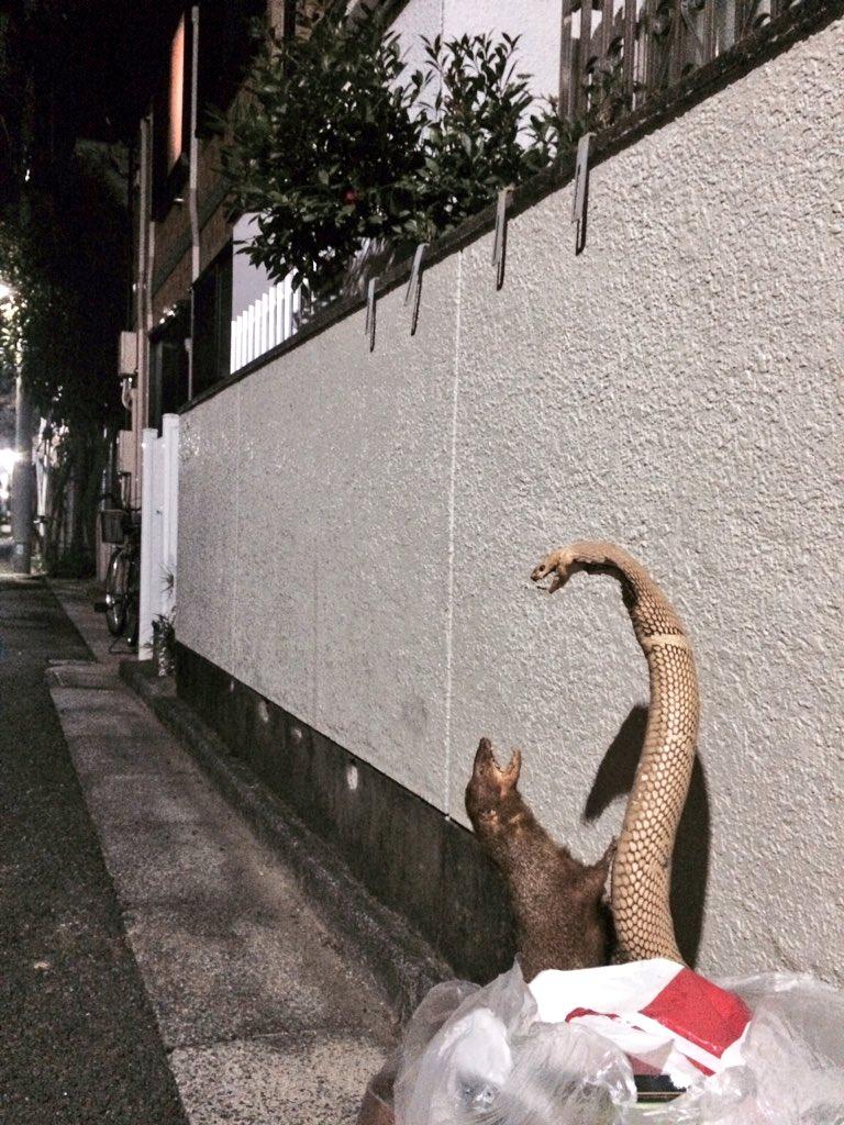 近所に、ハブとマングースをすてたひとがいる pic.twitter.com/WnwFcipAqL