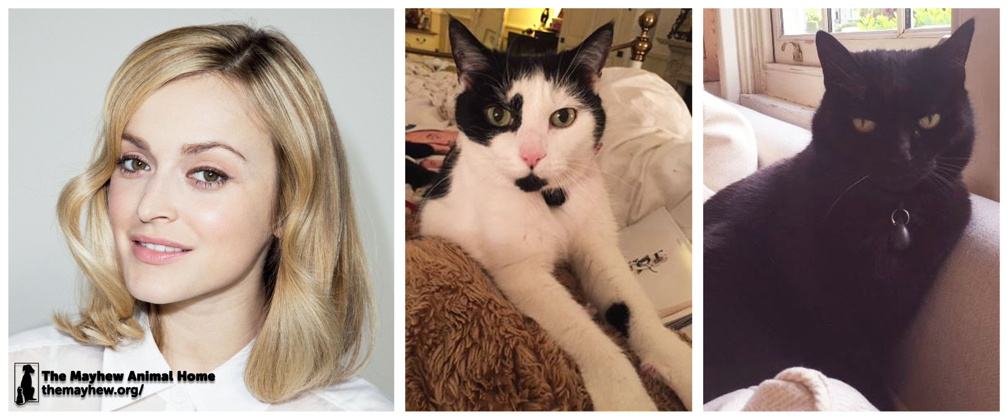 RT @themayhew: We are happy to see that @Fearnecotton's rescue Mayhew #cats are doing well! https://t.co/xxINDXRTPk #AdoptDontShop https://…