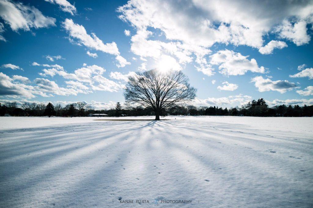 冬の昭和記念公園は、想像以上に綺麗だった。静かで東京じゃないみたいだった。#photo #写真 #coregraphy pic.twitter.com/I5mHrKxsJO