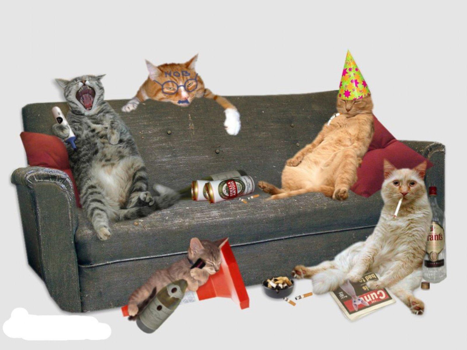 Рисунки пдд, открытки пьяные кошки