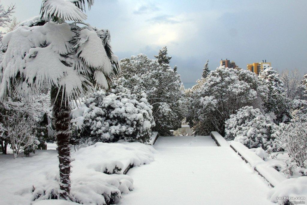 Зимний сочи картинка