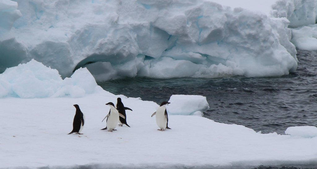 Ok, you want penguins.... #IceStation https://t.co/gdBHsudeJs