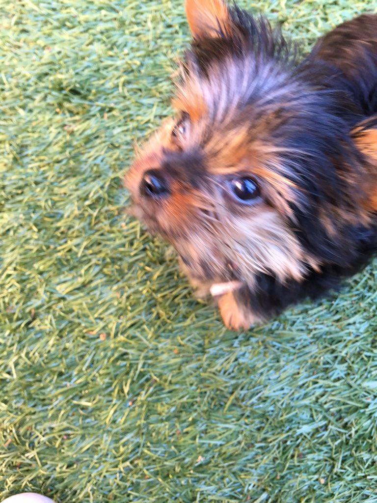 Pictures Of Jojo Siwa S Dog