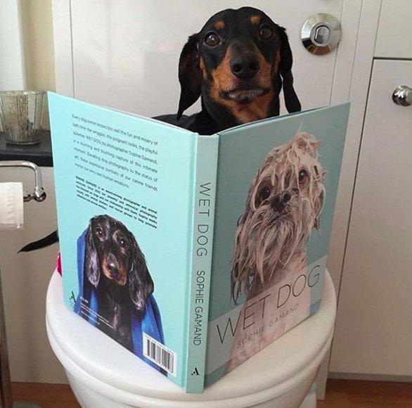 Toilette per cani negli aeroporti americani