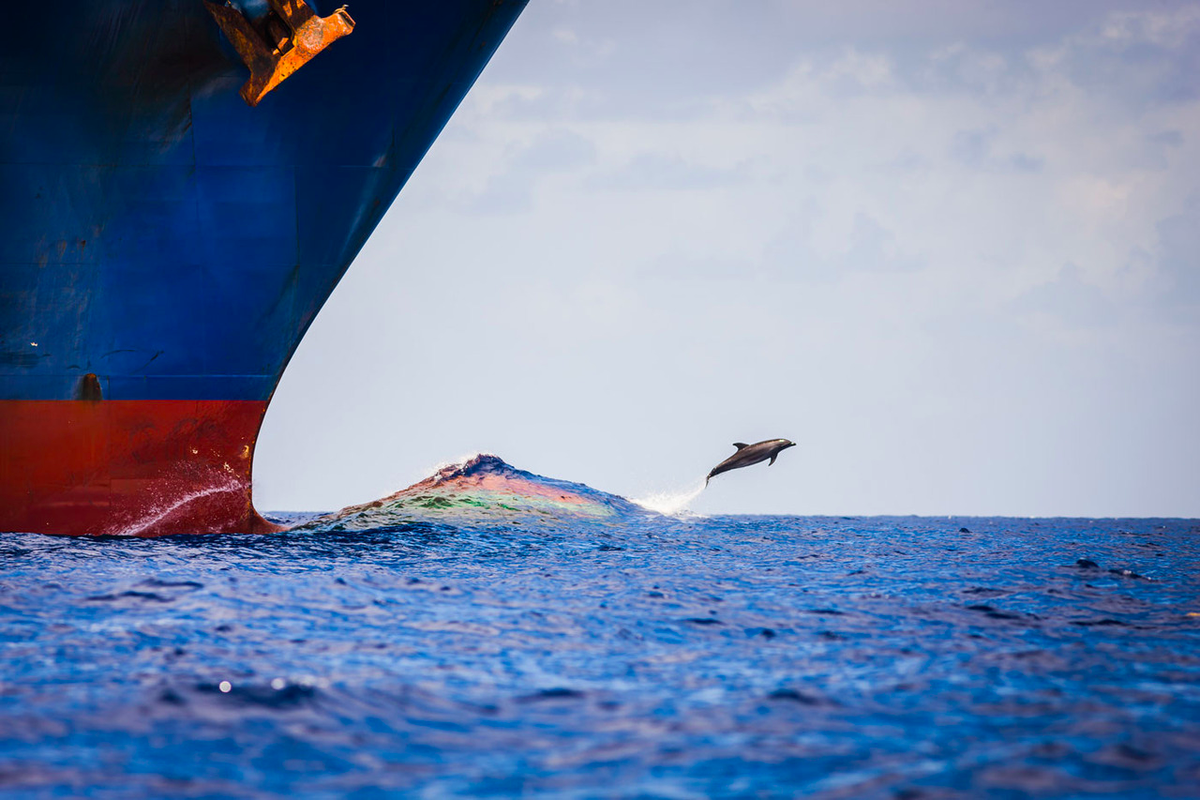 A dolphin jumps from the bow wake of a container ship #Shipping #Maritime views https://t.co/ICv4CQQKVC