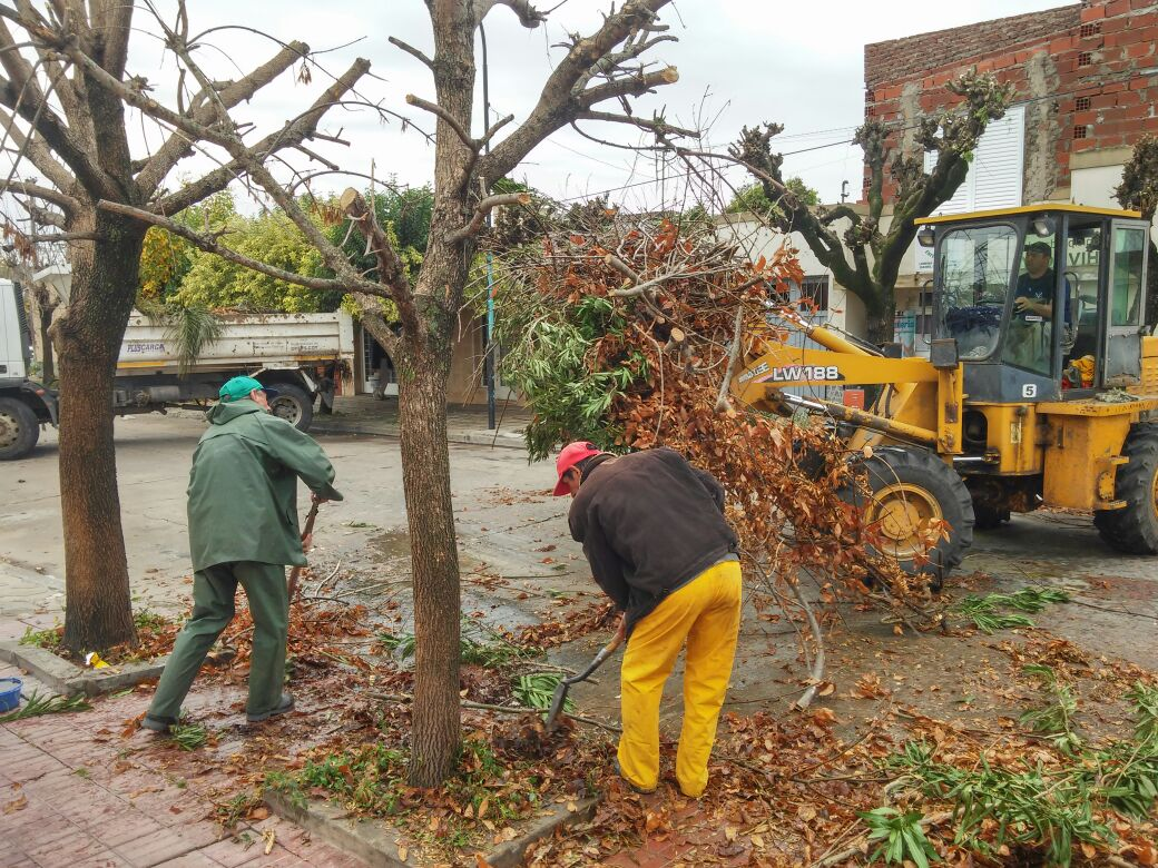 Municipalidad recoleccion de ramas