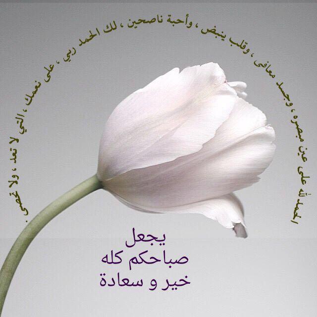 6 شج ـرة طي بة Gaadaa3 Twitter Good