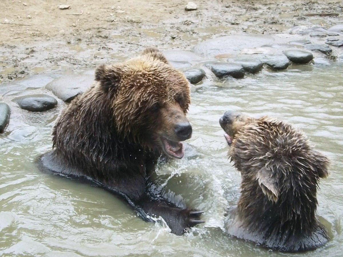 熊 いじめ