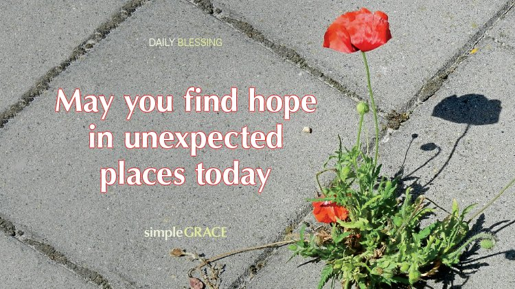 Find More Blessings Here &gt;&gt;  http:// bit.ly/1Egemgp  &nbsp;    #hope #unexpected #flowers<br>http://pic.twitter.com/68c6zKu7OJ