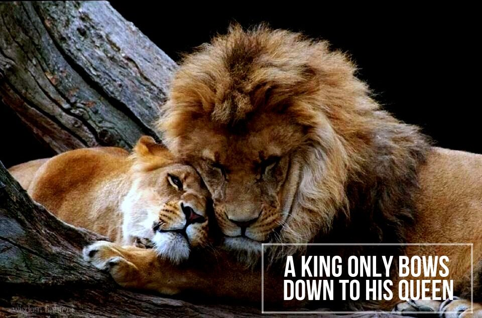 "Wisdom Fighters On Twitter: ""A King Only Bows Down To His"