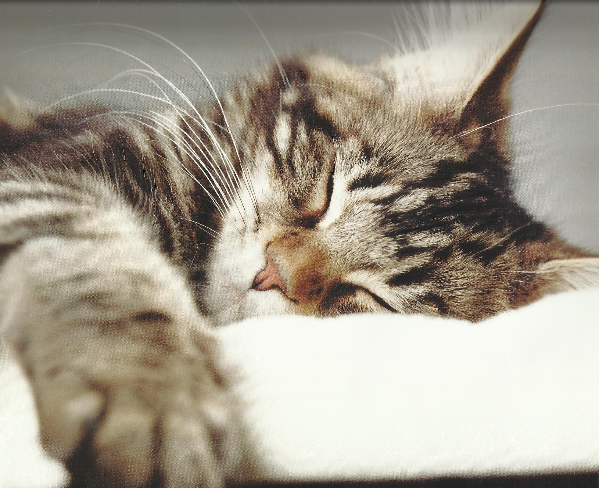 Спокойной ночи картинки с кошками