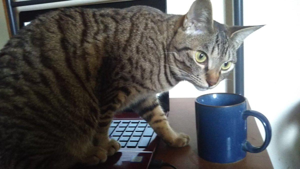 ニャンサムウェアに感染すると、ノートPC使用不可になる上、自分の水が飲まれるという恐ろしい例