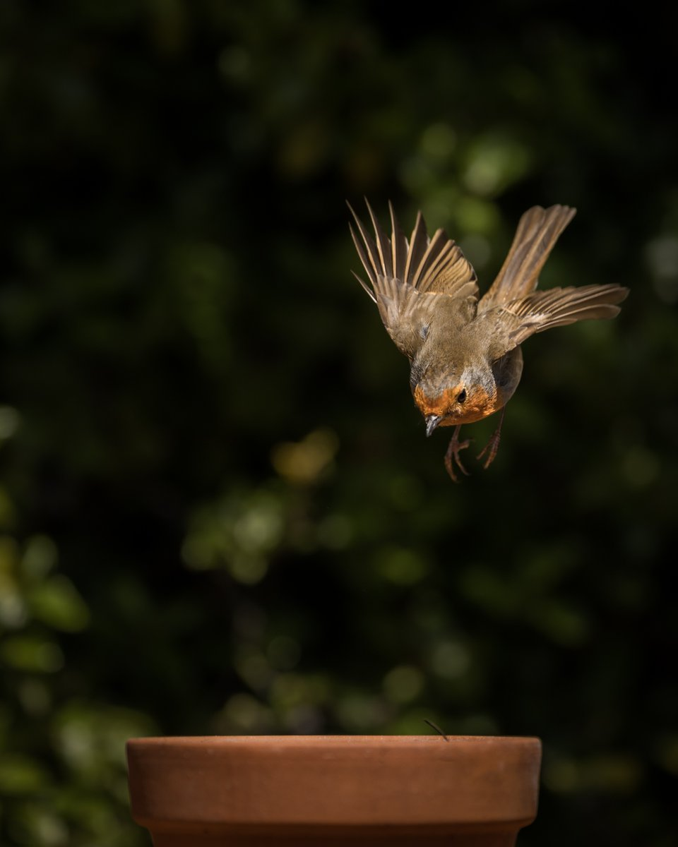 And finally – just when you thought you'd escaped bird week – in storms @merseamillsy and this diving robin! #WexMondays https://t.co/rJe7jACjMH