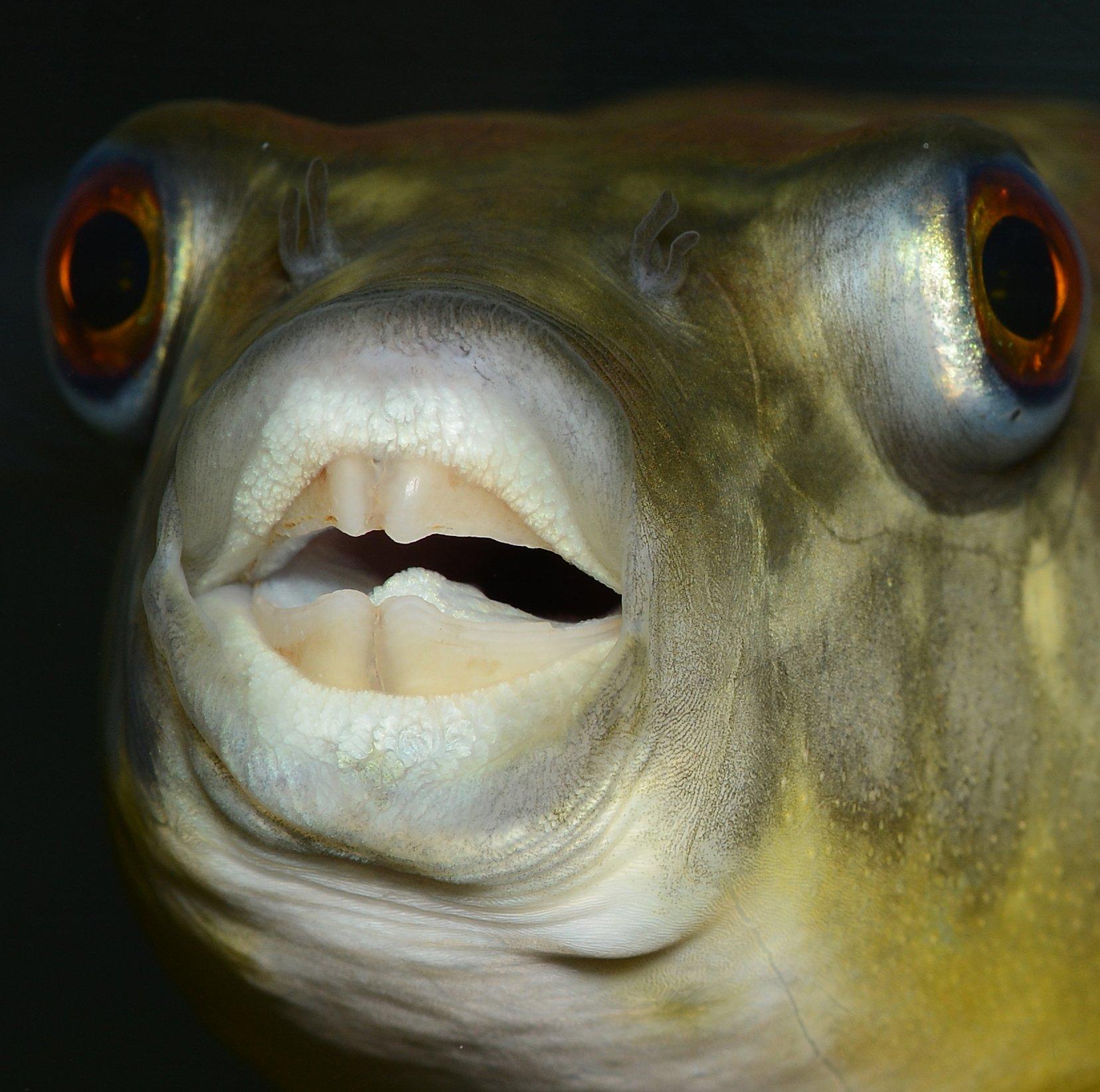 этого рыба с клювом картинки если это