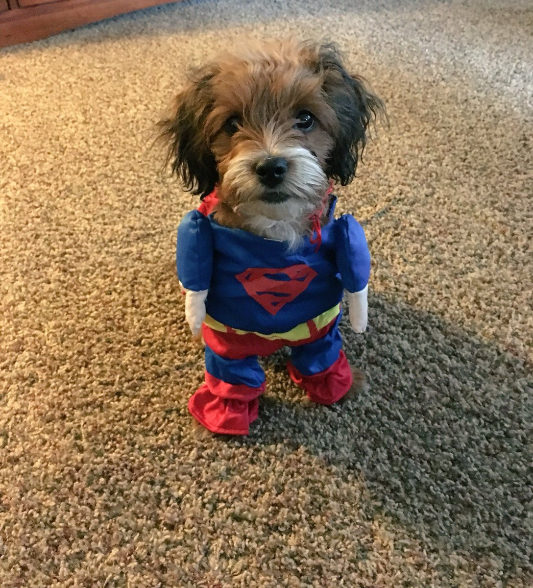 Superman reporting for duty!