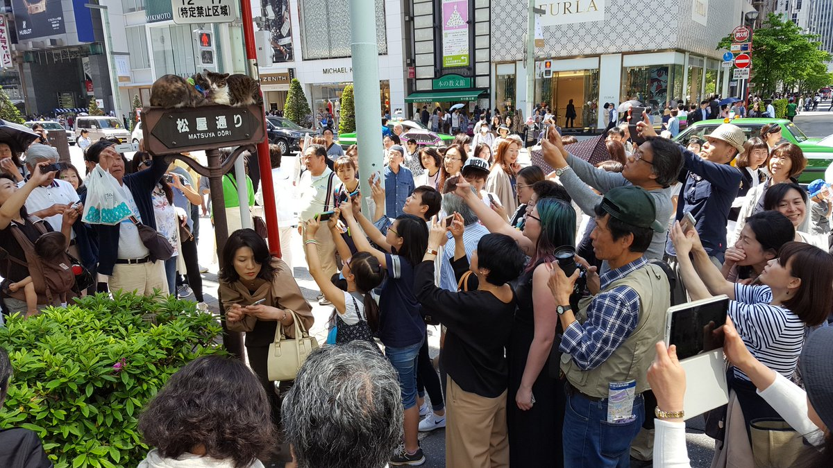 In the middle of Ginza, Tokyo, there are two cats face squishing and PEOPLE ARE FREAKING OUT. https://t.co/WsFECqp3w4