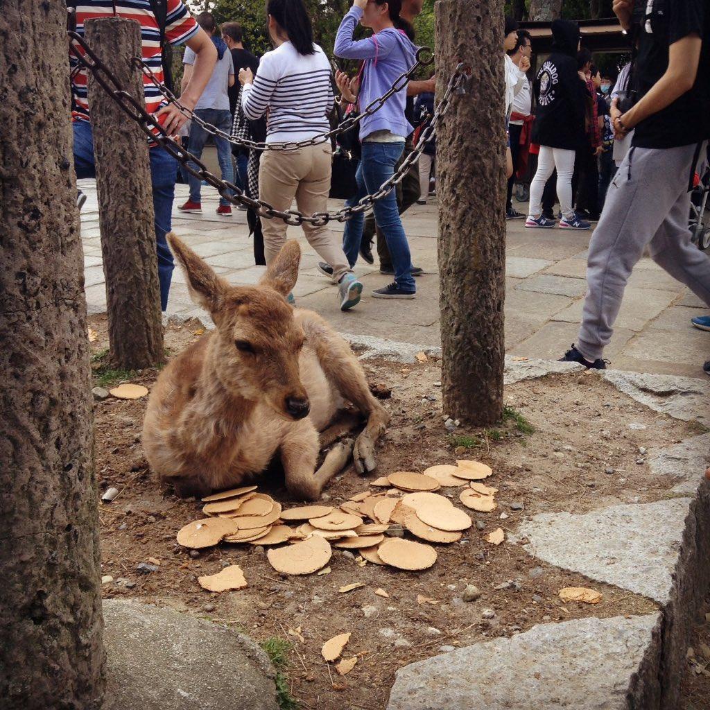 東大寺、鹿せんべいが飽和状態でお供物みたいになってる…