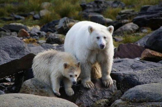 These hotels are offering stays worth £7000 to hunters who stop killing bears https://t.co/lgKDaXO4Nz https://t.co/nqxbkP7ltL