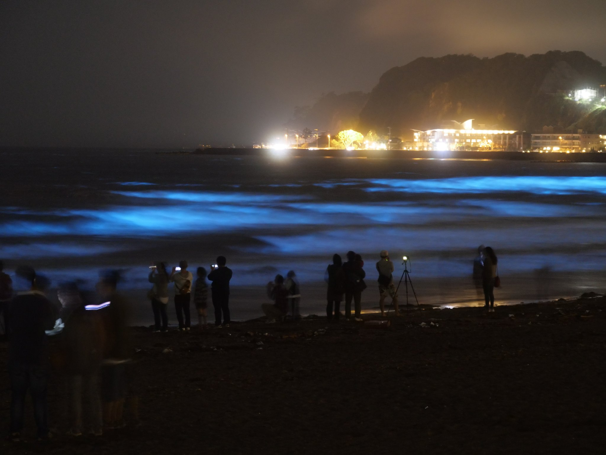 まだまだ見られるよ、鎌倉・由比ヶ浜の夜光虫。<br>ツイートの反響の多さに驚いております(^o^;