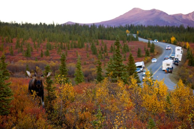Http Www Nature Com News Human Noise In Us Parks Threatens Wildlife