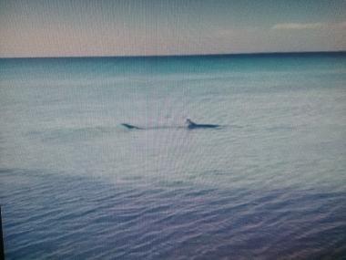 Avvistamento Lido Pizzo di Gallipoli: squalo vicino a riva