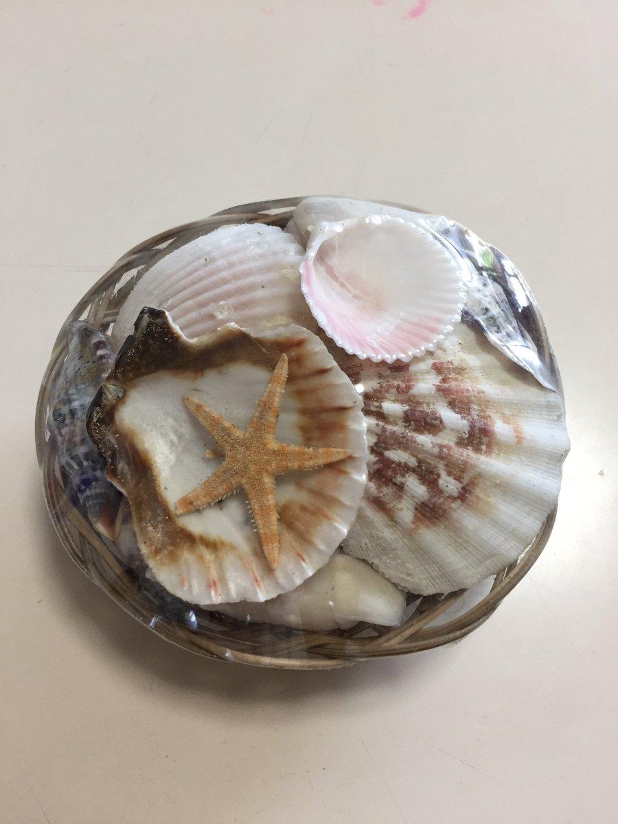 test ツイッターメディア - 娘が工作で貝殻を使いたいとか言い出して、海に行く予定ないしなーって困ってたんだけどまさかの #seria  驚異の品揃え。何でもあるな… https://t.co/NrLqsaBEnv