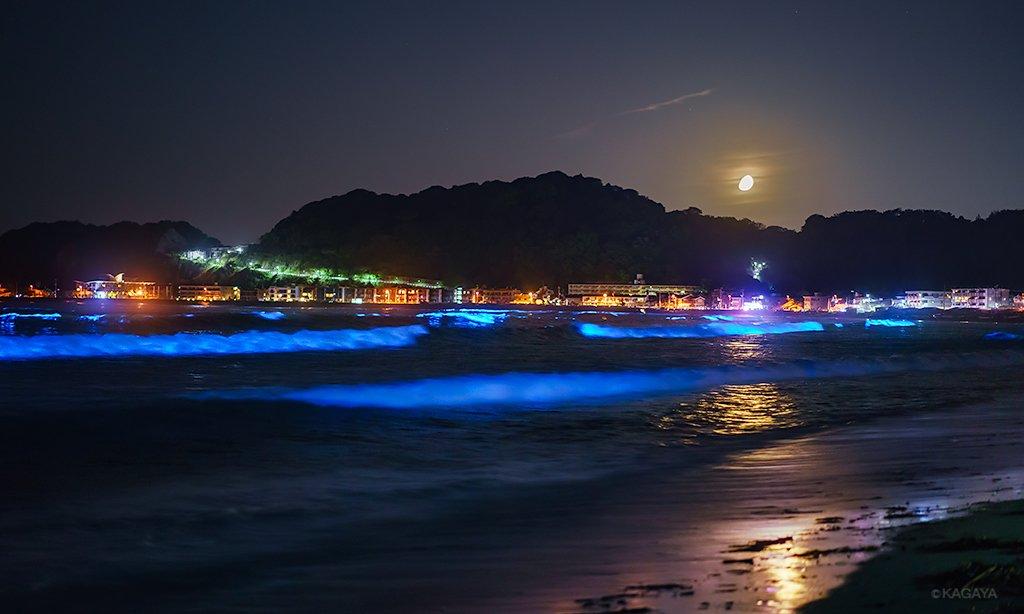 十日夜の月が西へ沈むと、 夜光虫の波は一層青く輝きを増しました。 (今朝未明、神奈川県にて撮影)