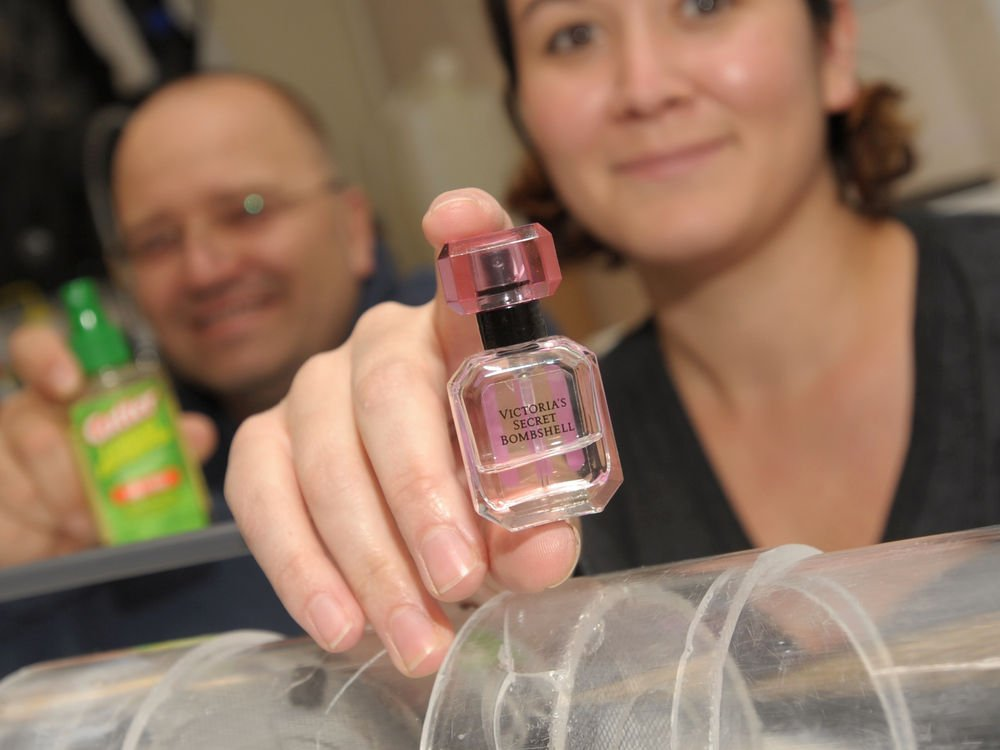 Victoria's Secret Perfume Wards Off Mosquitoes, Study Finds #Darren Rizzi  https:// checkthescience.com/news/7182-vict orias-secret-perfume-wards-mosquitoes-study-finds &nbsp; … <br>http://pic.twitter.com/NwFJvHu3Ep