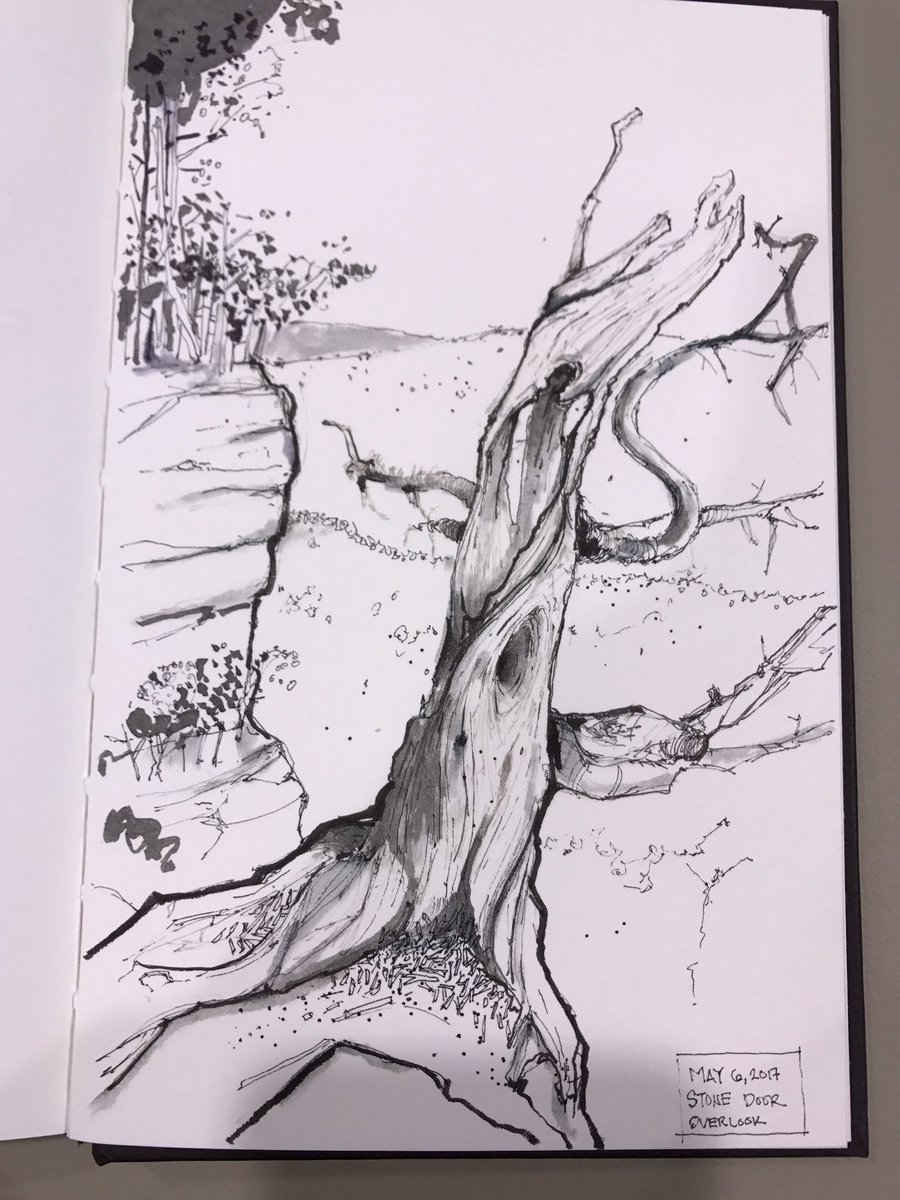 Gnarled and bleached #tree #trunk #stonedoor overlook #beershebasprings #tennessee #outdoors #doodlebags #ink #illustration #sketch #drawing<br>http://pic.twitter.com/BDD4ieaquc &ndash; à Stone Door Entrance