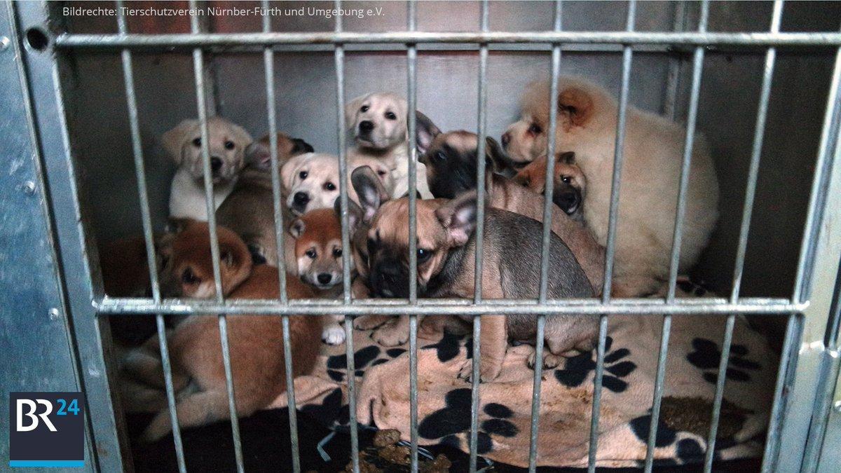 Br24 On Twitter Für Gerettete Welpen Tierheim Nürnberg Bittet Um
