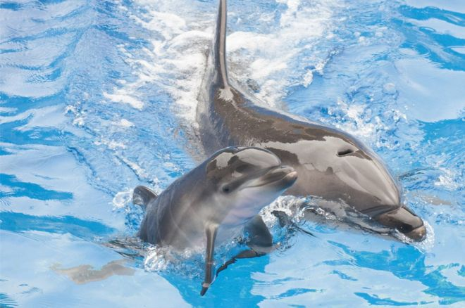 Thank you France for banning the breeding of dolphins and killer whales in captivity.  https://t.co/SYKuKxMF3n https://t.co/uwsfTea2Qc