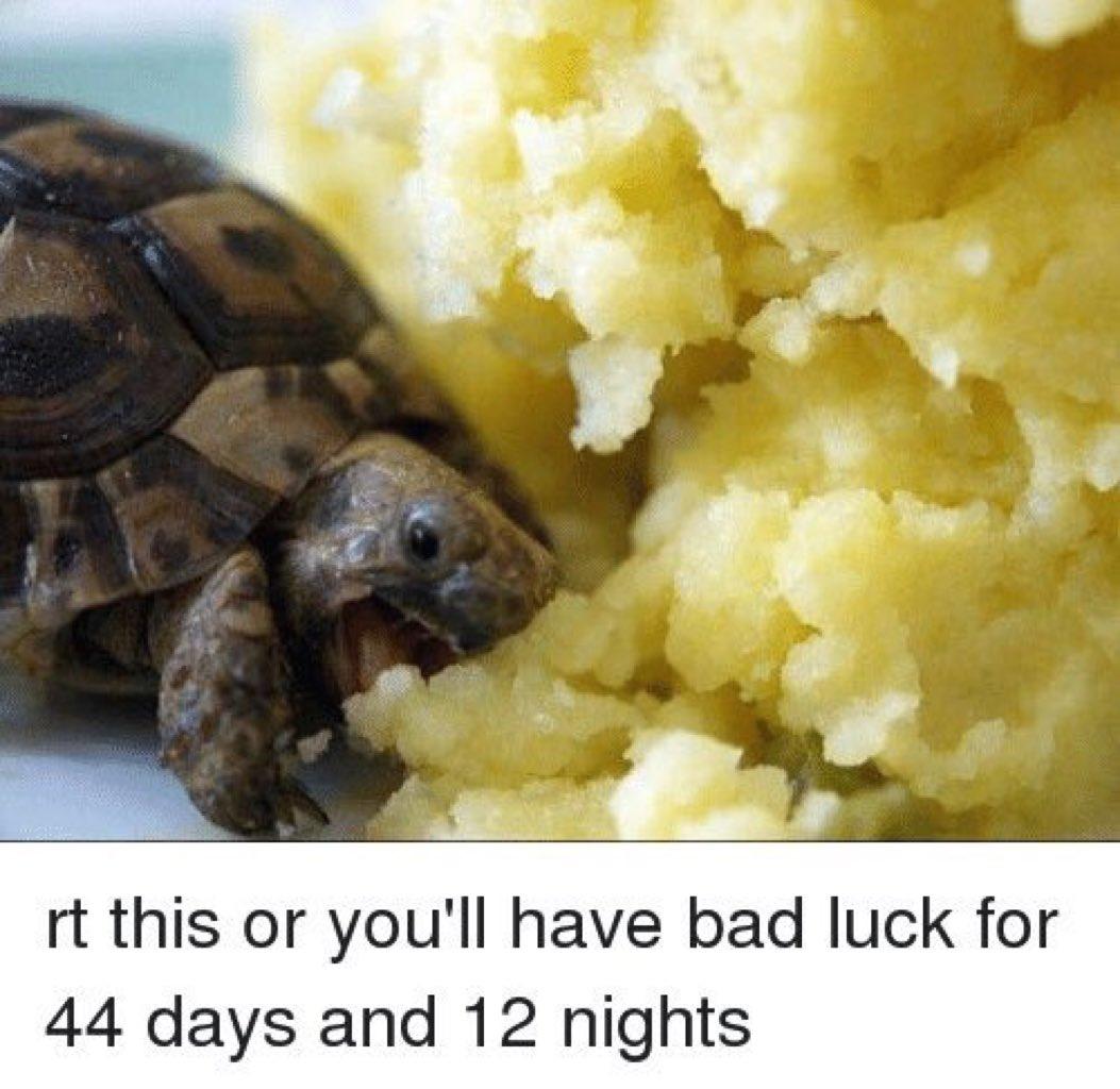 I'm not even risking it