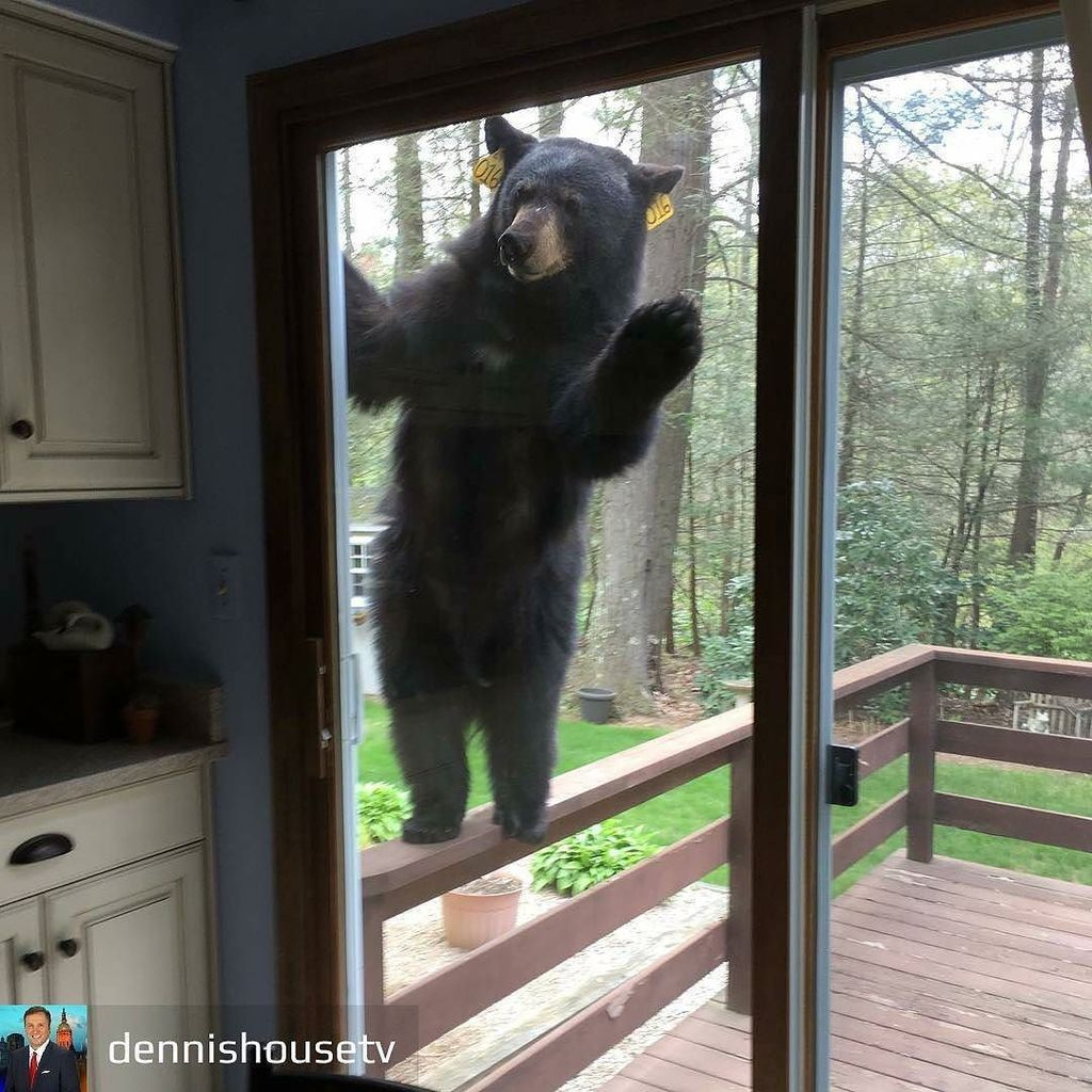 @Regrann from @dennishousetv -  Caption this! My friend Bob Belfiore sent this to me from Avon. His neighbor was b… https://t.co/htzQ1ASZVF https://t.co/HO4coi1E1w