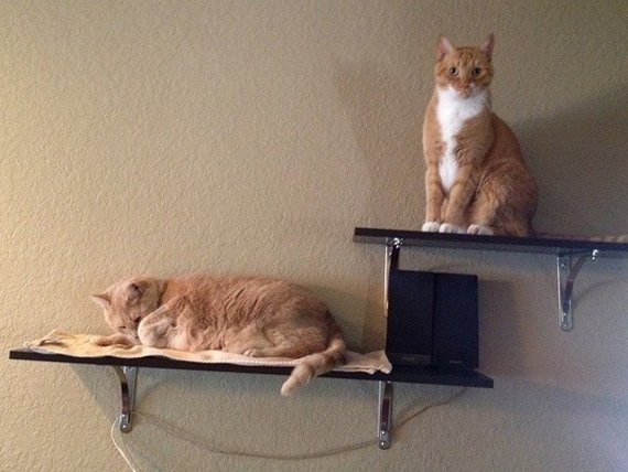 How to Build Cat Shelves